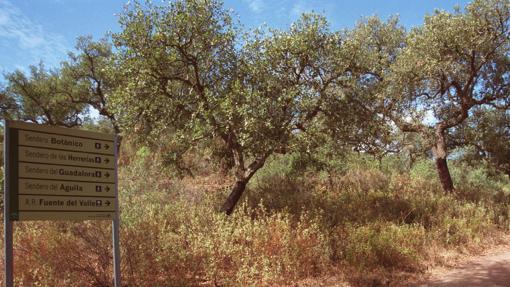 Alberga una de las zonas de bosque mediterráneo mejor conservadas de Sierra Morena -