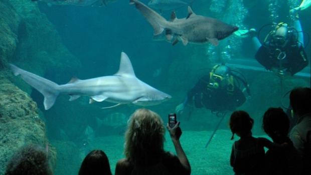 Visitantes en el acuario de la localidad almeriense