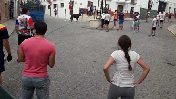 Una de las reses sueltas en las calles de Carcabuey