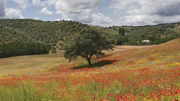 Sierra Morena de Córdoba da el primer paso para ser Parque Natural