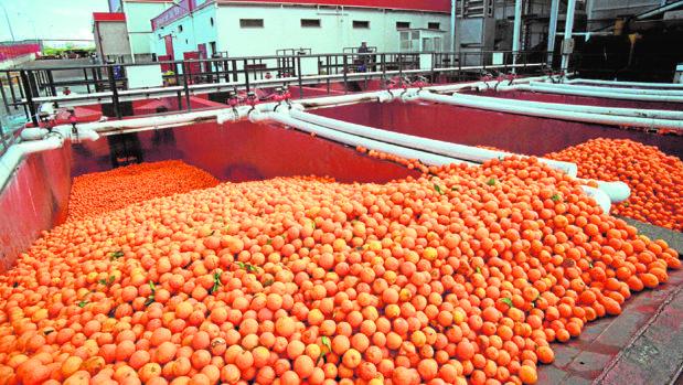 Planta de procesado de naranjas para zumo en Palma del Río