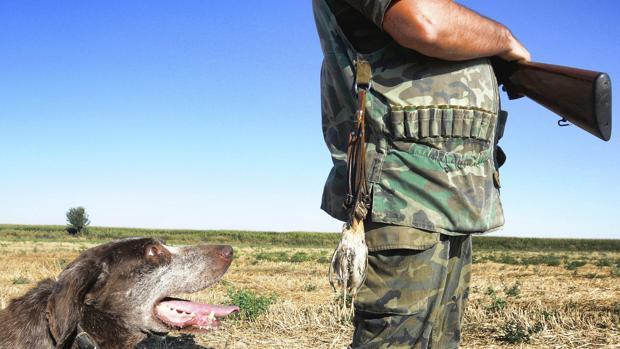 Un cazador y su perro en una tirada de codornices