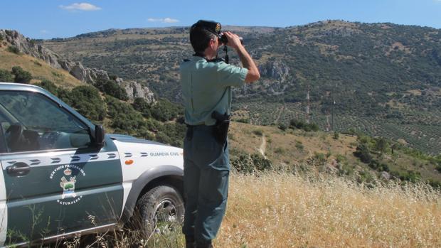 Un agente en un servicio de vigilancia en la sierra de Córdoba