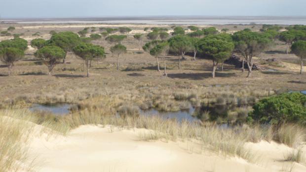 La sobreexplotación de acuiferos dejan sin agua a Doñana