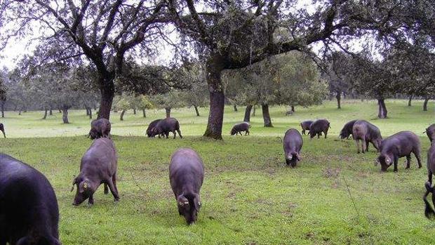 Ganado pastando en una zona del norte de la provincia de Córdoba