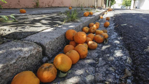 Naranjas en una calle de Córdoba