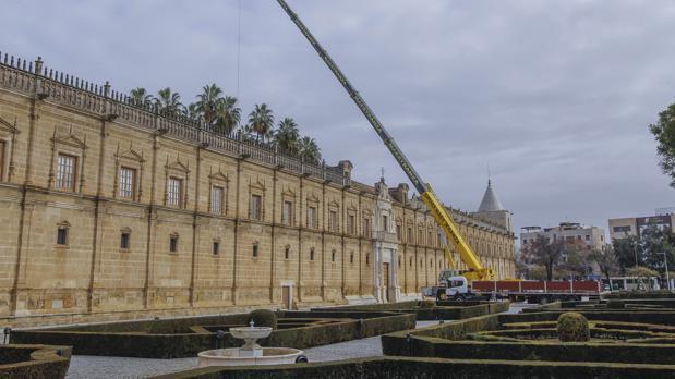 La grúa con la que se están realizando los estudios de las palmeras del Parlamento