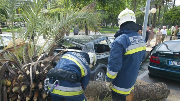Imagen de archivo de los bomberos de Córdoba retirando una palmera caída por el viento