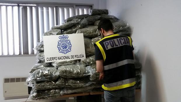 La Policía Nacional incauta 329 plantas de marihuana