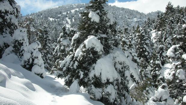 La Sierra de las Nieves, en Málaga