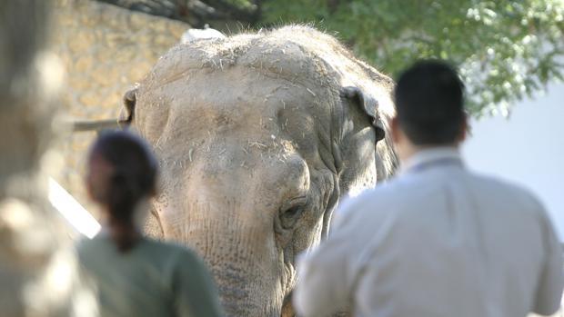 Flavia, la elefanta del zoológico