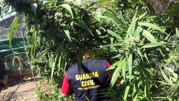 Imagen de archivo de un Guardia Civil desmantelando una plantación de marihuana