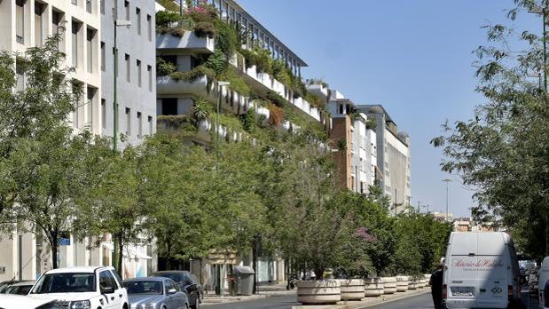 Avenida de la Buhaira de Sevilla
