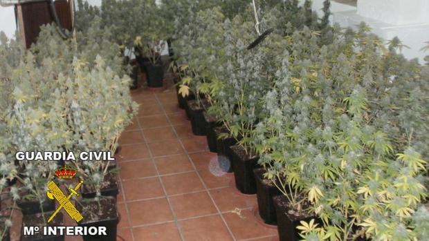 Imagen de archivo de varias plantas decomisadas por la Guardia Civil en el municipio granadino de Pinos Puente