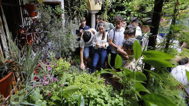 Jóvenes tocan las plantas aromáticas en el patio de Duque de la Victoria, 3