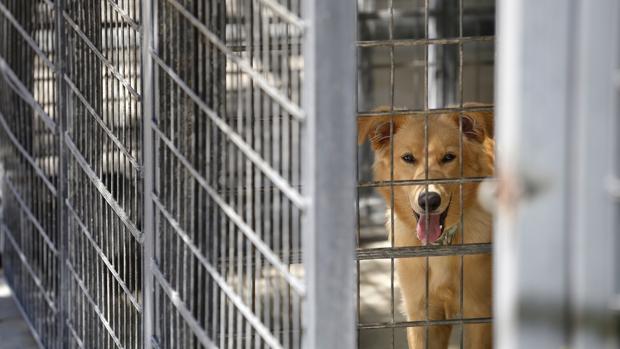 Varias decenas de perros han sido sacrificados en la perrera onubense de Valverde del Camino