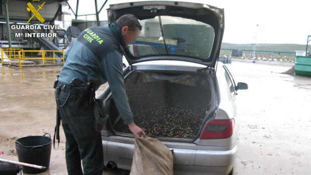 Un agente inspecciona el vehículo del detenido por el robo de aceitunas