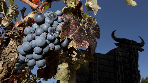 Un viñedo afectado por el hongo mildiu