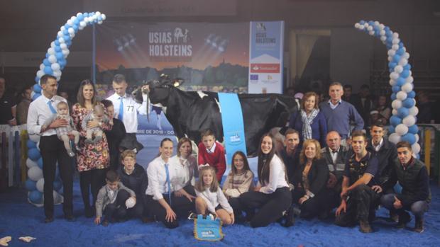 La vaca ganadora en ela Feria del Ganado Frisón de Dos Torres