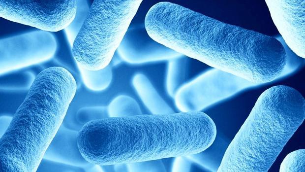 Así es la bacteria que provoca la tosferina