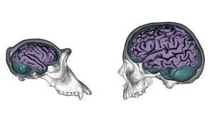 La clave del éxito, tener un cerebro adaptable