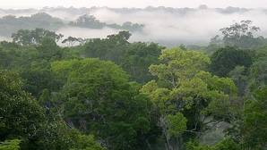 La selva amazónica no resistiría sequías prolongadas, según un estudio