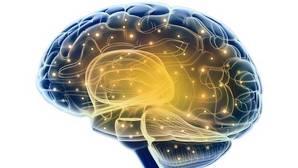 El cerebro no tiene género