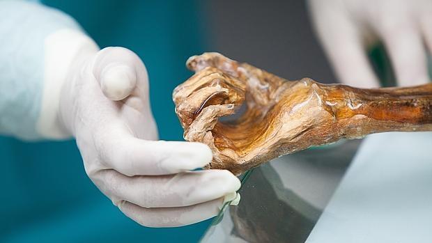 La mano de Ötzi, el «hombre de hielo»