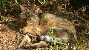 Los gatos domésticos aparecieron en China hace 5.000 años