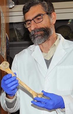Antonio Rosas sostiene un fémur de neandertal
