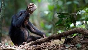 Los niños usan herramientas igual que un chimpancé