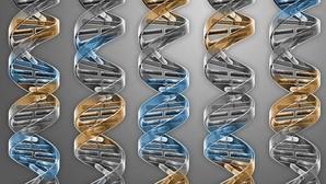 Crean el genoma artificial más pequeño a partir de un organismo vivo existente