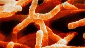 Aún falta por descubrir el 99,999 por ciento de los seres vivos, según un estudio
