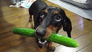 Los perros desconfían de los dueños enfadados