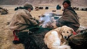 Los perros surgieron dos veces de entre los lobos