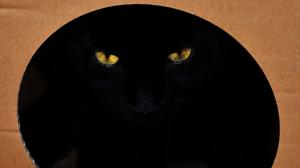 La paradoja de los dos gatos vivos y muertos al mismo tiempo