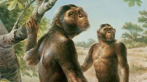 La australopiteca «Lucy» tenía compañía