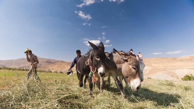 Agricultores modernos en las montañas de Zagros, Irán