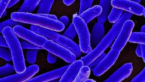 El «puñado» de bacterias que nos hace humanos