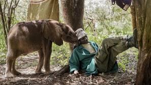 La lucha por la conservación del gran Elefante Africano