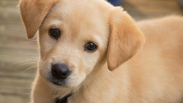 Sin embargo, hay perros que se sienten más motivados con la comida