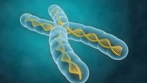 Crean un catálogo universal de los errores genéticos del ser humano