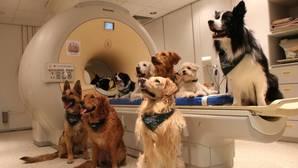 Los perros entienden lo que dices... y cómo lo dices