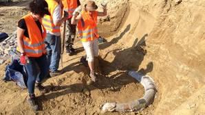 Encuentran restos de un mamut de un millón de años en Austria