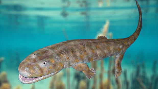 Representación de Acanthostega. Estos animales están entre los primeros vertebrados que vivieron en el medio terrestre