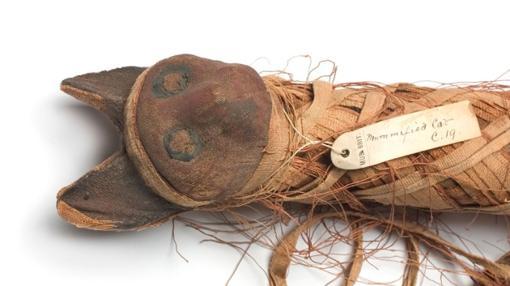 Fueron momificados a millones en el Antiguo Egipto