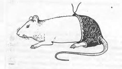 Un dibujo de una rata con su pantaloncito