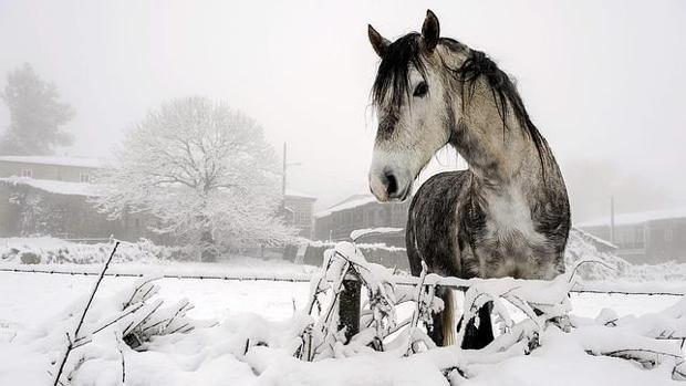Los caballos apuntaban con sus hocicos a unos símbolos para expresar su deseo de llevar o no una manta