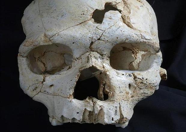 Cráneo 17 de la Sima de los Huesos, prueba de uno de los primeros casos de asesinato documentados de toda la Historia