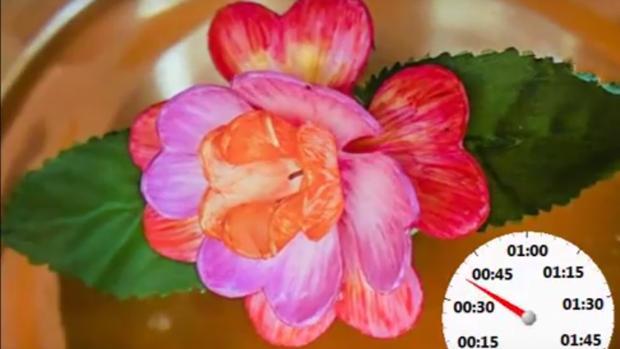 Los investigadores idearon una flor artificial con pétalos que se abren poco a poco sin ningún estímulo externo